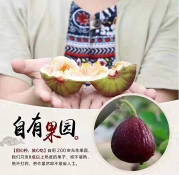 赣州采摘园亲自摘水果蔬菜
