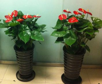 毕节出租鲜花的种植方式