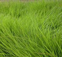 惠州绿化工程质量保证