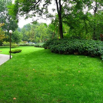 惠州绿之源绿化工程公司批发的草种寿命长
