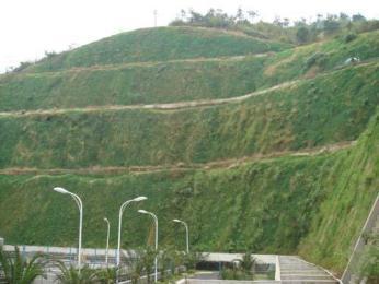 小区绿化建设的作用