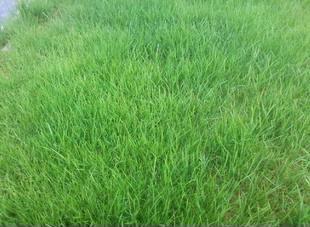 草种栽培技术