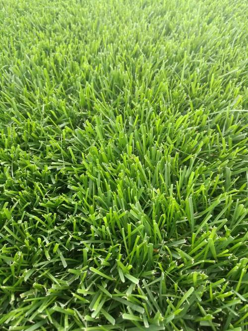 草种施肥和病虫防治