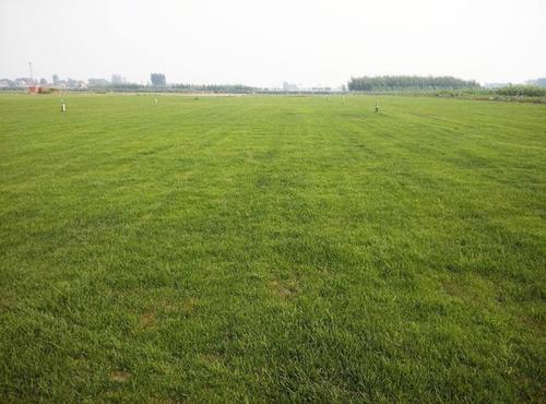 绿化工程专业可靠的公司
