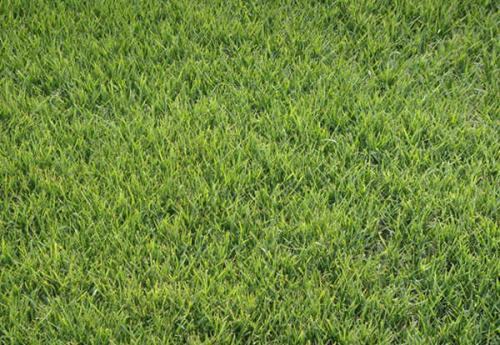 深圳草种批发公司 影响草种成活的因素