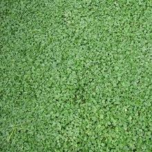 深圳绿化工程公司 绿化植物的选择