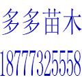 广西桂林兴安县多多苗木基地