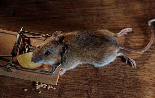 中山上门灭老鼠电话
