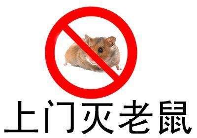 绍兴灭鼠公司 灭鼠方法