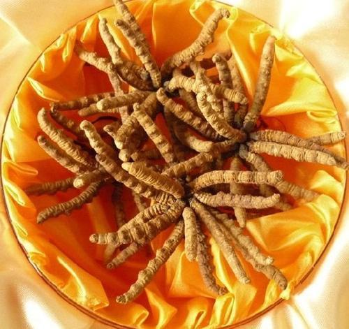 礼品回收 冬虫夏草针对癌症的效果