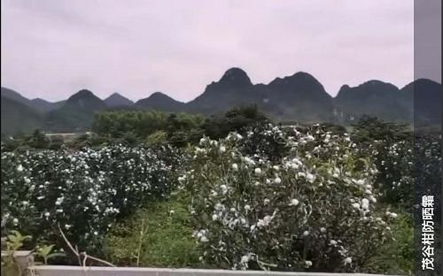 南宁茂谷柑防晒霜厂家