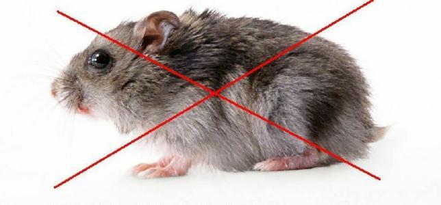 西安专业灭老鼠