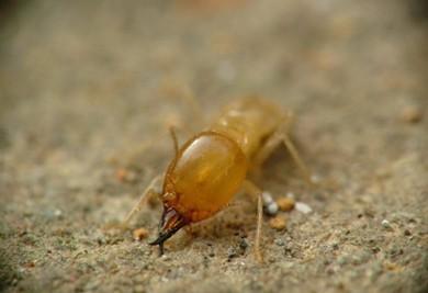 家庭装修防白蚁的最佳办法
